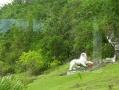 Malvern CC 2011 Tour To Barbados